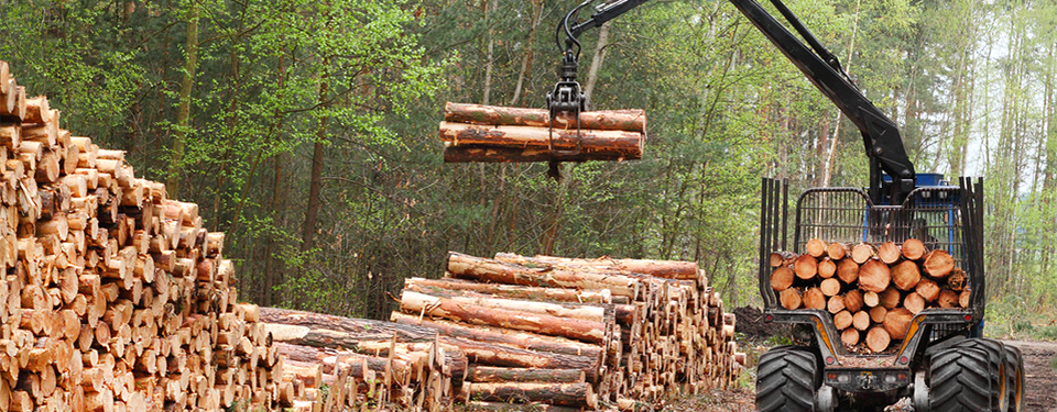 wholesale kiln dried logs